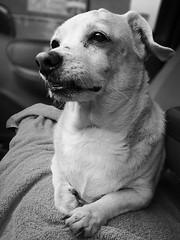 Mi Mascota (Alberto Aguiar Diaz) Tags: perros animales mascotas