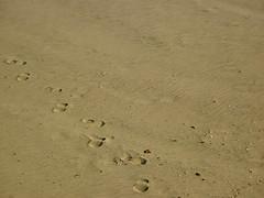 Tracks (Franthropologist) Tags: newyork texture beach sand steps footprints longisland longbeach prints