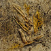 panotxa de blat de moro, fulles, terra, acrílic, goma laca i cola blanca, de grifoll