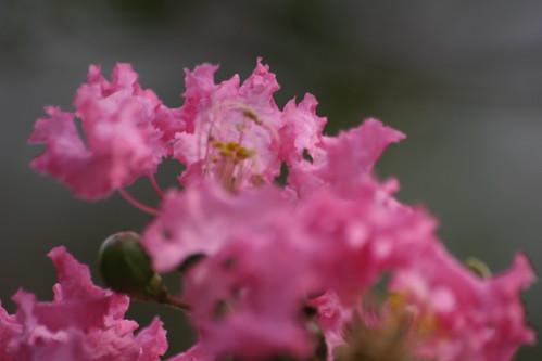 Floraza