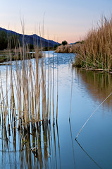 Reeds in a Stream (jeandayphotography.com) Tags: california ca color water grass rural creek sunrise landscape spring desert april lonepine owensvalley owensriver 2011 jday jeanday