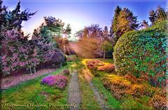 Seville Garden (Muzammil (Moz)) Tags: morning autumn london fall places sunrays moz leafcolors oldwindsor virginiawaters canon60d muzammilhussain sevilegardens
