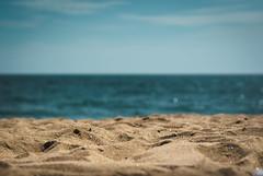 Newport Beach, CA (svllcn) Tags: ocean california desktop travel blue sea summer wallpaper vacation sky green beach nature water field relax 50mm sand nikon dof bokeh grain newport depth d3000