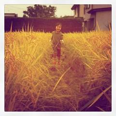 収穫する娘