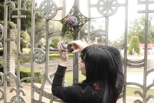 Hyde Park Rose