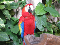 Parrot by ChrisMcArdle1, on Flickr