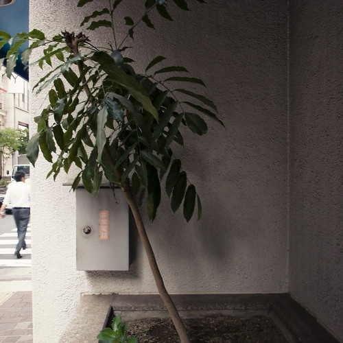 Trendy Tree in Ginza