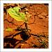"upload-DSCN5679 • <a style=""font-size:0.8em;"" href=""http://www.flickr.com/photos/8038254@N06/6260709179/"" target=""_blank"">View on Flickr</a>"