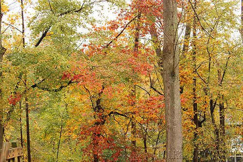Fall in the back yard