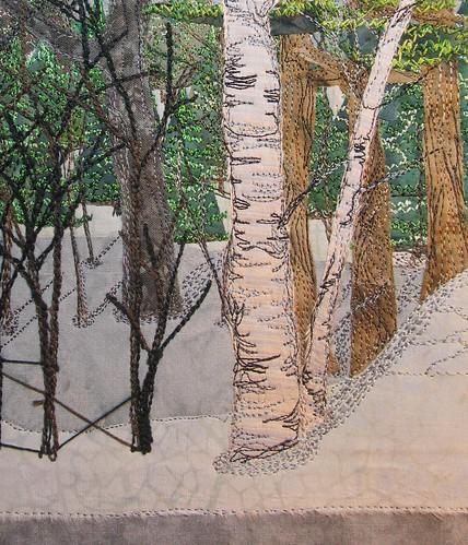 big birch tree