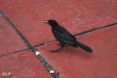 Eat Little Guy Don't Mine Me!!! (Derek Licek's Photography) Tags: bird photography florida derek popcorn fl pinellas liceks