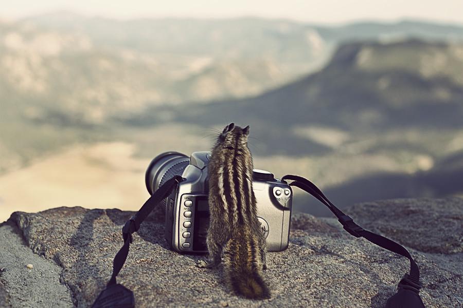 Chipmunk Photography