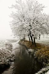 Gelo.. (Marianna MdC) Tags: gelo alberi milano natura canon5d nebbia acqua mdc mariannadicori
