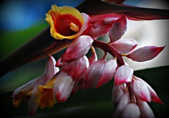 ~FlowersOnOahu,Hawaii#5~ (TravelsThruTheUniverse) Tags: niceshot tropicalplants tropicalflowers zengardens tropicalgardens tropicalfoliage tropicallandscapes