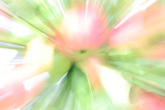 zoom apple (Maiodiem) Tags: red white verde green zoom natura rosso frutta bianco mele zooming zoomata zoomare
