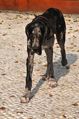 Xu Xu (Petlover1301) Tags: dog pet dogs cane cani animalidomestici