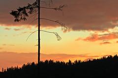 ..alone.. (Norbert Králik) Tags: sky tree silhouette forest landscape alone canoneos5d canonef85mmf18usm