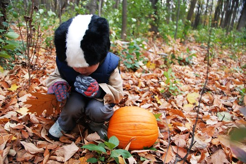 pumpkins and skunks
