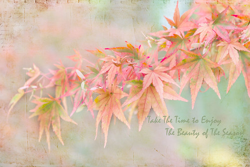 10/31/2011Seasons Beauty by Pat Mark