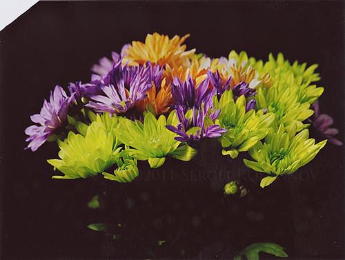Flowers @ 22