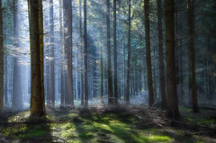 Light and Chaos (Dietrich Bojko Photographie) Tags: autumn light wild mist fog forest germany deutschland licht bravo europe nebel wald brandeburg forst wildniss dietrichbojko dietrichbojkophotographie