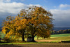 century old limes - tilleuls centenaires (pierre hanquin) Tags: blue autumn trees cloud color colour tree fall nature colors clouds automne landscape geotagged nikon europa europe colours belgium belgique couleurs champs belgië vert bleu ciel arbres nuages paysage landschaft arbre couleur namur thon 1685 d7000 1685mmf3556gvr fleursetpaysages ruby10 lelitedespaysages hanquin masterclasselite