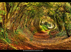Autumn Path (Edwinjones) Tags: pictures uk autumn trees light summer england sky sun color colour fall texture nature leaves yellow forest woodland landscape photography sussex countryside photo woods warm walks colours westsussex photos path walk sony farming scenic picture tunnel pic autumnleaves seeds foliage sunflowers trunk greenery dslr footpath hdr highdynamicrange pathway ramble chichester rightofway photomatix a700 halnaker tonemapped tonemapping