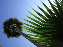 palms (dmixo6) Tags: sky sunlight colour strange beauty lines spain curves angles dugg dmixo6