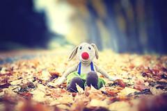 Mr. Nariz coloroda (oo Felix oo) Tags: autumn ikea toy hojas kid felix creative otoo mueco nio martinez juguete creativa felmar