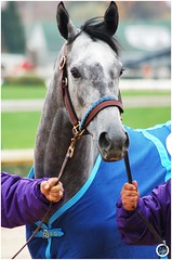 Creative Cause (Shazstock) Tags: horse cup club mare bc racing jockey colt stallion thoroughbred equine filly breeders