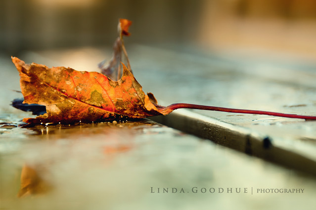 fall finale...