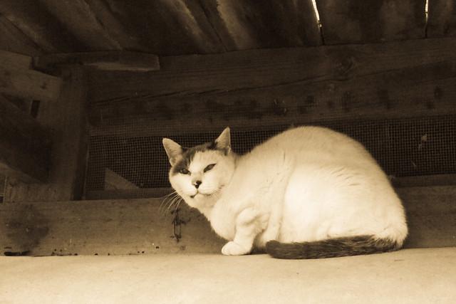 Today's Cat@2011-11-09