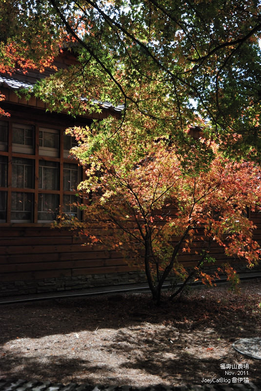 2011_1106福壽山農場DSC_3270