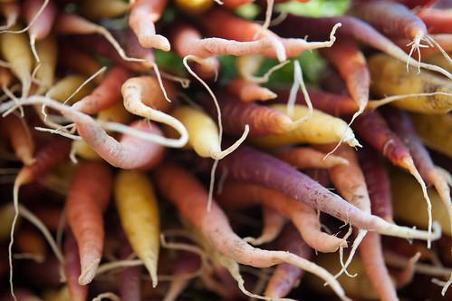 multicolored carrots