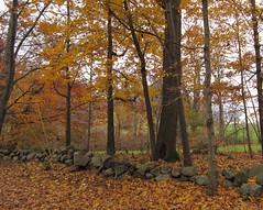 Day 315 : November 11, 2011 (Elizabeth Thomsen) Tags: november autumn usa geotagged unitedstates massachusetts 2011 wenham project365 walnutroad elizabeththomsen ethomsen geo:lat=4260646127 geo:lon=7086809345