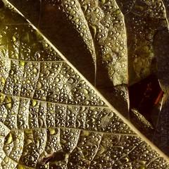11.11.11 drops (martina★linnea) Tags: göteborg 111111 botan botaniskaträdgården 2011