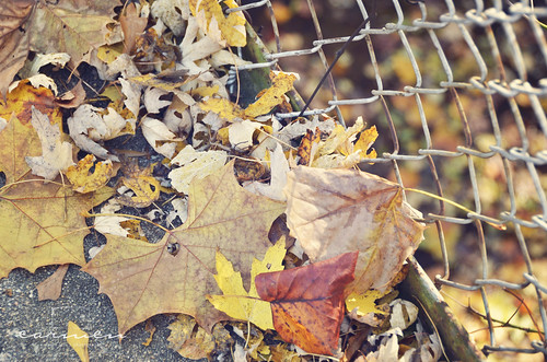 fenced leaves