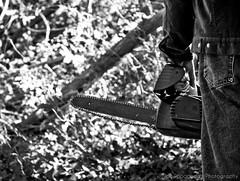 (Joe Papagoda) Tags: trees light blackandwhite bw man lines back nikon triangle dof hand view fingers d2x chainsaw cutting nikkor 1870mm composure
