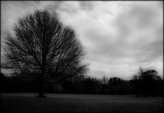 ★...Nature's simplicty ...★ (~~Heavenxxx89 Art & Photography) Tags: uk autumn england blackandwhite bw tree london nature monochrome landscape mono scenery monchrome nikond3100
