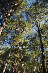 Camp John Hay Eco Trail (joy_sale) Tags: road trip morning blue trees sky green nature submitted outdoors early woods october roadtrip hike trail blogged baguio tall pinetrees campjohnhay 2011 ecotrail gappool oct2011 gettyimagesphilippinesq4 g11nov01