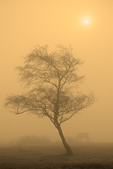 Horse & Sun through Fog (rgarrigus) Tags: morning england horse mist tree silhouette misty fog mystery sunrise landscape farm yorkshire farming foggy silhouettes farmland silhouetted sfumato blubberhouses greatphotographers garrigus robertgarrigus robertgarrigusphotography