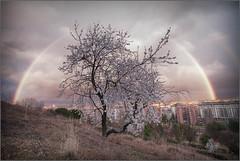 Almendro y arco iris - Parquesol (