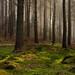 Ladybower Woods