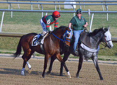 2012-03-17 (343) St Pat's Day - r10 Grant Whitacre on #2 Shackey's Love (JLeeFleenor) Tags: horses ma caballo cheval photos uma jockeys gigi cavallo cavalo each kuda alogo hest thoroughbreds soos hevonen koin laurelpark 馬 häst лошадь 马 koń faras סוס حصان konj кон άλογο घोड़ा pfeerd grantwhitacre marylandracing