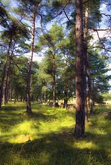 Forest, Gotland