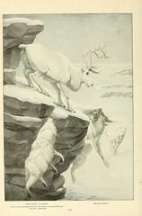 Anglų lietuvių žodynas. Žodis canis lupus tundrarum reiškia <li>canis lupus tundrarum</li> lietuviškai.