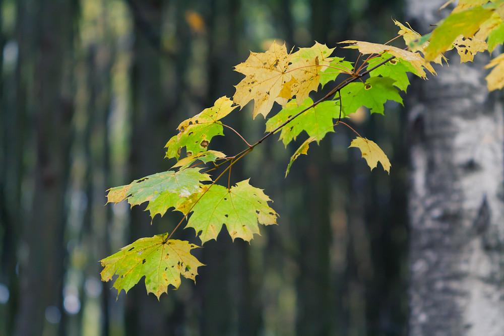 Осень в Туле