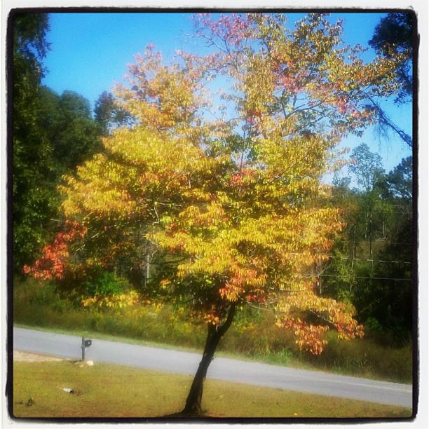 tree10072011_1