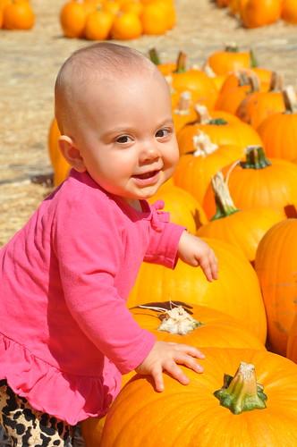 EBD pumpkin patch