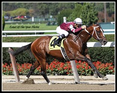 Tapizar and Corey Nakatani (EVENTOF THE YEAR PHOTOS) Tags: horseracing thoroughbreds belmontpark xodo tapizar